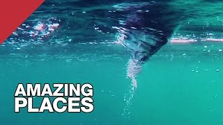 Download The World's Most Powerful Tidal Current: the Saltstraumen Maelstrom Video