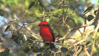 Download The Pantanal- A Wetland at the Crossroads Video