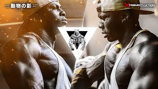 Download BODYBUILDING MOTIVATION | ISN'T A MOOD. IT'S A LIFESTYLE! Video