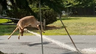 Download deer vs. soccer net Video