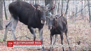 Download Комісія НАН внесла лося до Червоної книги України Video