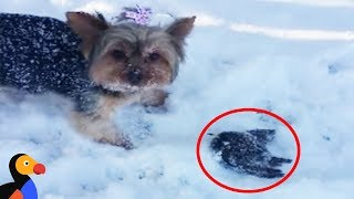 Download Woman Rescues Frozen Bird Rescued With A Blow Dryer | The Dodo Video