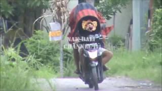 Download Barong Bangkung Anak Bali Lucu #nakbali Video