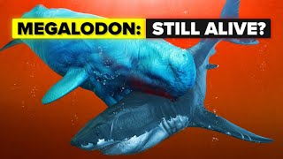 Download Does The Megalodon Shark Still Live? Video