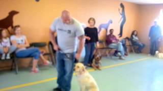 Download HOW TO STOP A DOG FROM PULLING IN MINUTES Video