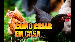 Download COMO CRIAR GALINHA EM CIDADES - NOSSO GALINHEIRO DOMÉSTICO - OFF THE GRID Video
