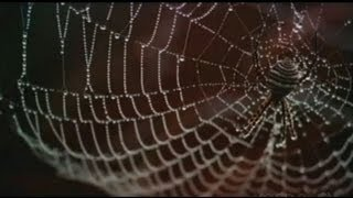 Download Smart Material: Spider Silk Video
