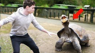 Download PLAYING WITH INSANE ANIMALS! Video