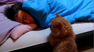 Download Our Funny Cat: ″Why Won't He Wake Up to Play With Me?″ Video
