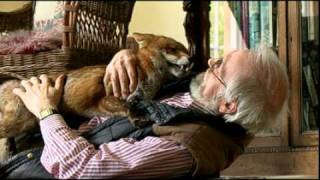 Download Jack the Fox - A Day in the Life Video