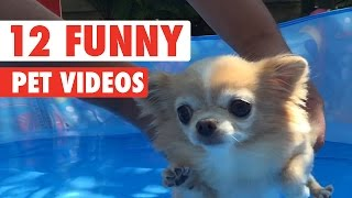 Download 12 Funny Pet Videos Compilation 2016 Video