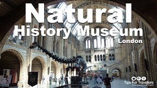 Download Natural History Museum London: Video Tour (dinosaurs, whales and more!) Video