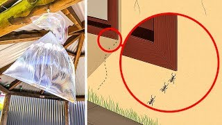Download 10 Ways to Get Rid of Spiders, Ants, Bugs and Bees In Your Home Video
