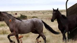 Download Be Free!! Wild Mustangs Released To Engler Canyon Ranch Video