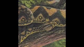 Download Rainforest Spiritual Enslavement - Ambient Black Magic [HOS-498] Video