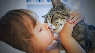 Download Cute Cats 😻😊 Sweet Loving Cats (Part 2) [Funny Pets] Video