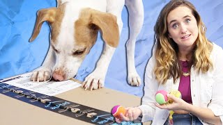 Download Dogs Unbox Amazon's Best-Selling Dog Toys Video