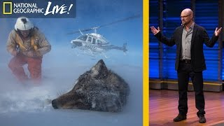 Download How Animals and Humans Clash and Coexist in Yellowstone | Nat Geo Live Video