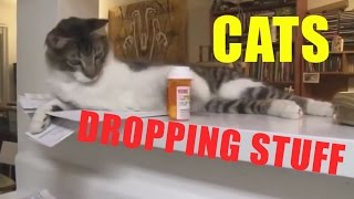 Download FUNNY CATS DROPPING STUFF COMPILATION Video