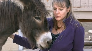 Download Animal Communicator Sharon Loy Mini Documentary Video