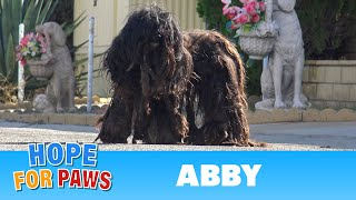 Download Extremely matted homeless dog wouldn't let anyone touch her for over two years!!! Video