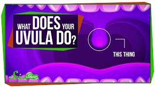 Download What Does Your Uvula Do? Video