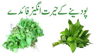 Download Pudina benefits in urdu | Pudina khane ke fayde | Pudina ka istemal Video