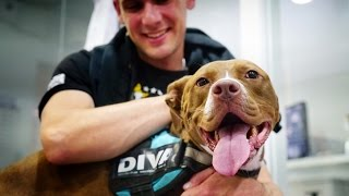 Download Amazing dog cries with joy meeting the man that rescued her after 6 months apart Video