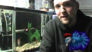 Download Top Three Fish To Breed For Money Part 1 Project Video
