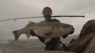 Download Surf Casting Rhode Island 30 and 25 Pound Stripers on Bucktail Jigs Video