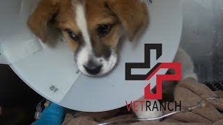 Download One Tough Pup Video