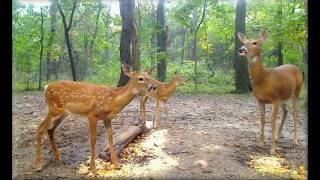 Download September 2016 Deer Trail Pictures Video