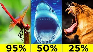 Download The Most Efficient Predatory Animals In The World Video