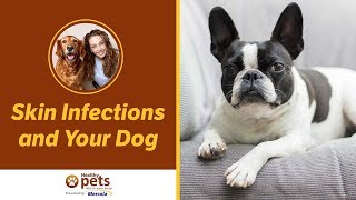 Download Skin Infections and Your Dog Video