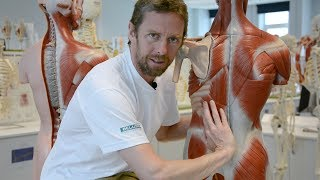 Download Erector spinae (back muscles) Video