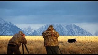 Download Photographing Wildlife of Grand Teton NP - Wild Photo Adventures Video