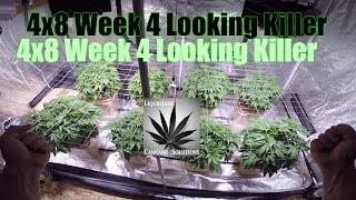 Download 4x8 Week 4 Looking Killer Video
