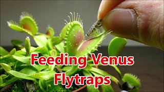 Download Venus Flytrap Slow Motion And Macro Video