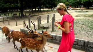 Download Deer attack in Nara Park Video