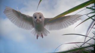 Download Dial-an-owl - Super Senses: The Secret Power of Animals: Episode 2 - BBC Two Video