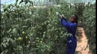 Download Le PCDA au service de l'innovation agricole Video