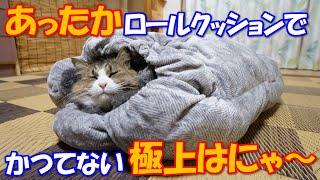 Download 巨猫のボス吉があったかロールクッションでかつてないほどの極上はにゃ~ Video