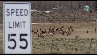 Download A Safe Passage: The Colorado Highway 9 Wildlife Crossing Project Video