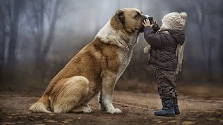 Download DOGS NEVER LIE ABOUT LOVE ★ Dogs Are True Friends [Funny Pets] Video