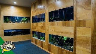 Download The Crazy 1 Month Update on the Fish Room/Studio with Aquapros, Flip Aquatics, Steenfott Aquatics Video