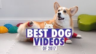 Download Best Dog Videos of The Year 2017 | Pets of 2017 Video