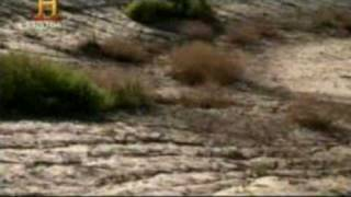 Download Mundo Jurásico - Grandes Asesinos - Parte 1 de 7 Video