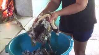 Download COMO DEPENAR UMA GALINHA Video