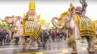Download Elephant Thai For His Majesty The Late King Bhumibol Adulyadej of Thailand Full Hd 1080p Video