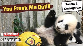 Download Hilarious! See How Easily Can Pandas Be Freaked Out!   iPanda Video